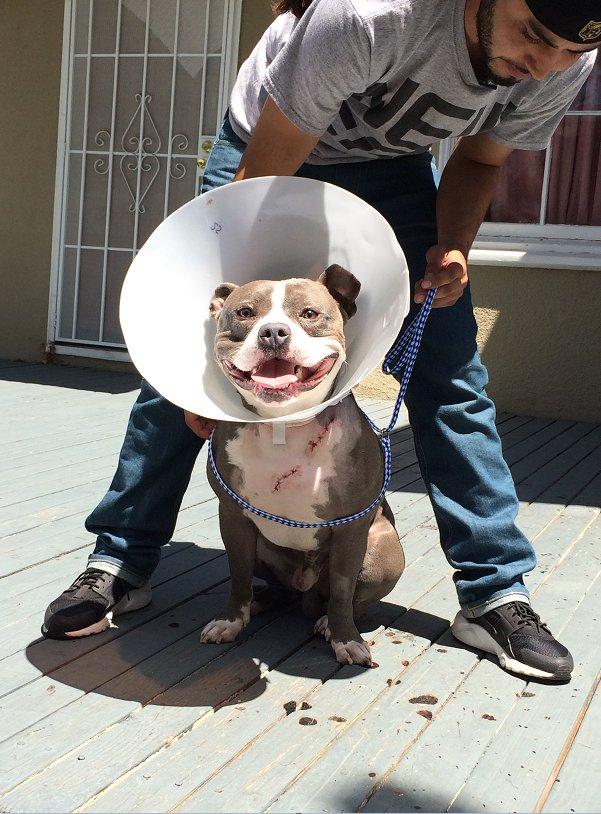 Vallejo couple outraged police officer shot dog