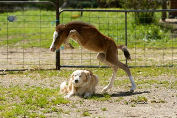 It appears that #showjumps can come in all shapes and sizes! #equestrianhour Credit: Pinterest https://t.co/506WZ0ZsNM