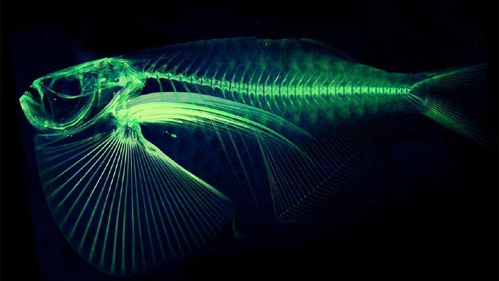 UW scientist launches effort to digitize all fish