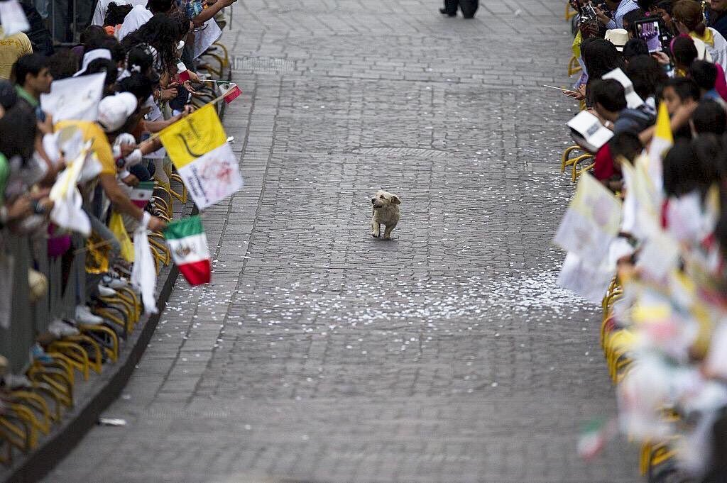 #IfYourDayIsBadAlwaysRemember this little dog who thought the parade was just for him. Love this pic @Pandamoanimum https://t.co/9Z2om83LD3