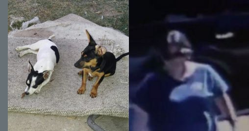 Woman steals two dogs from home in Pflugerville - share with your Austin-area friends! ->