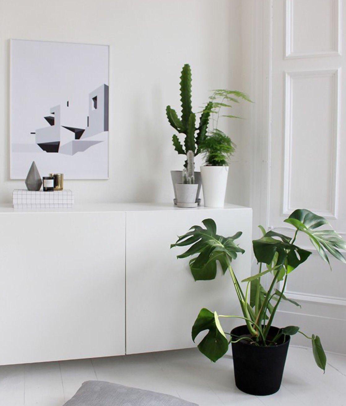 "Living Room Ikea Indonesia: VILLAFIORE On Twitter: ""Te Gusta Esta #planta Para Decorar"