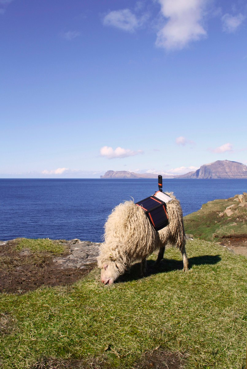 Remote country desperate for Google Street View enlists sheep with cameras