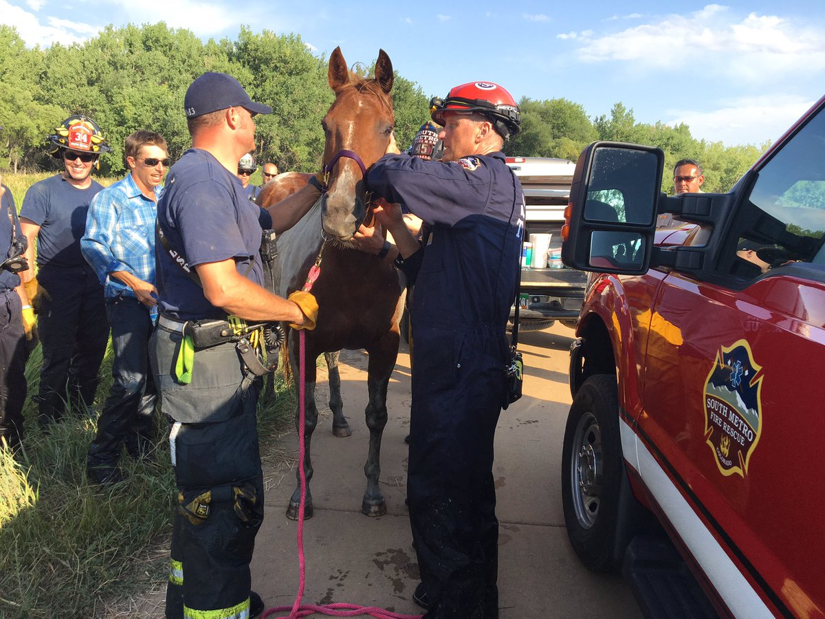 @SouthMetroPIO says Cupcake has no apparent injuries. Reunited with owner. Live on 4 now.