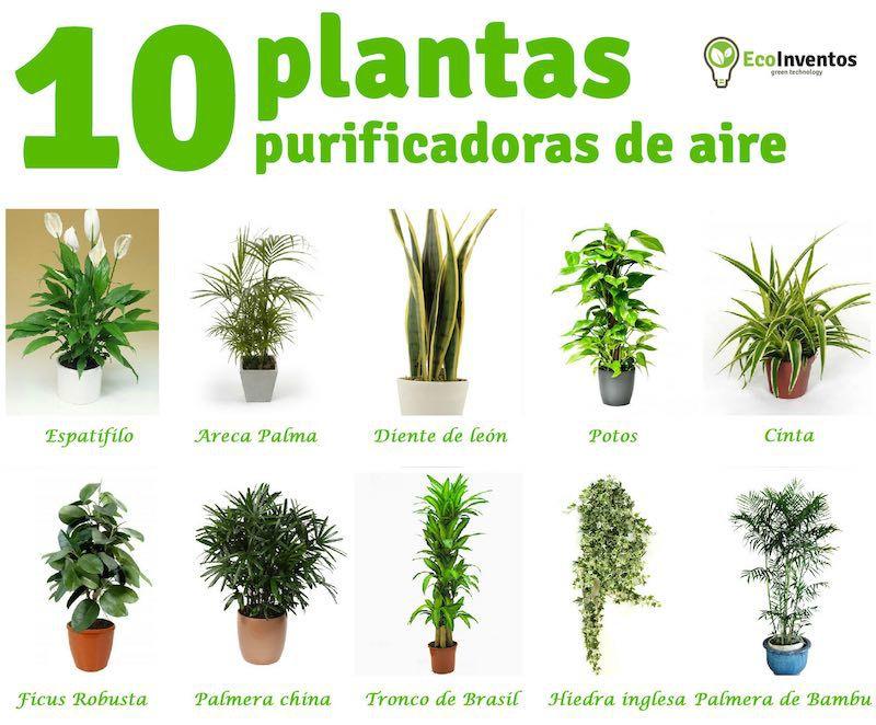 Julio fuentes greiremyah twitter - Plantas de interior que purifican el aire ...