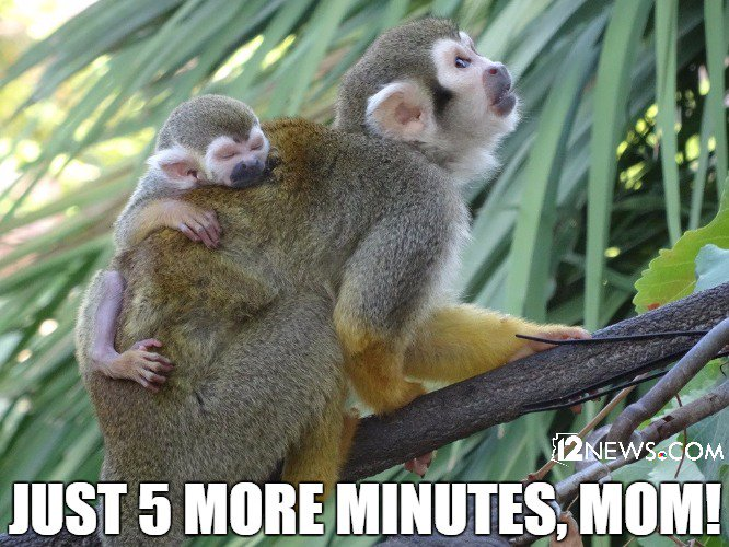 @PhoenixZoo sent us this pic of their new baby squirrel monkey! We can only imagine what he's thinking.