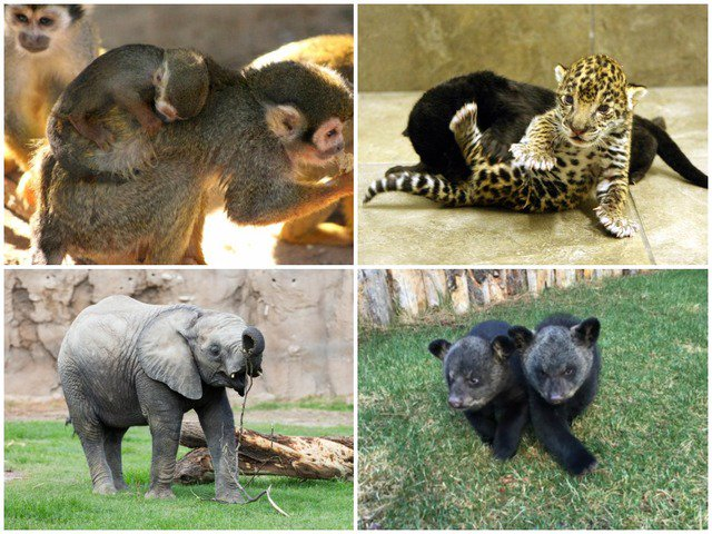 Baby fever? Here's all the baby animals on display at AZ zoos right now. abc15