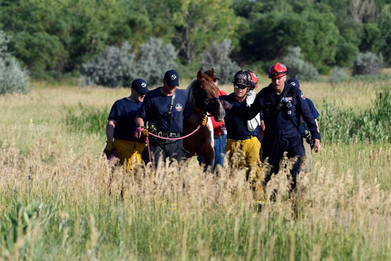 Cupcake the horse rescued in Cherry Creek State Park via @ClevelandClaire
