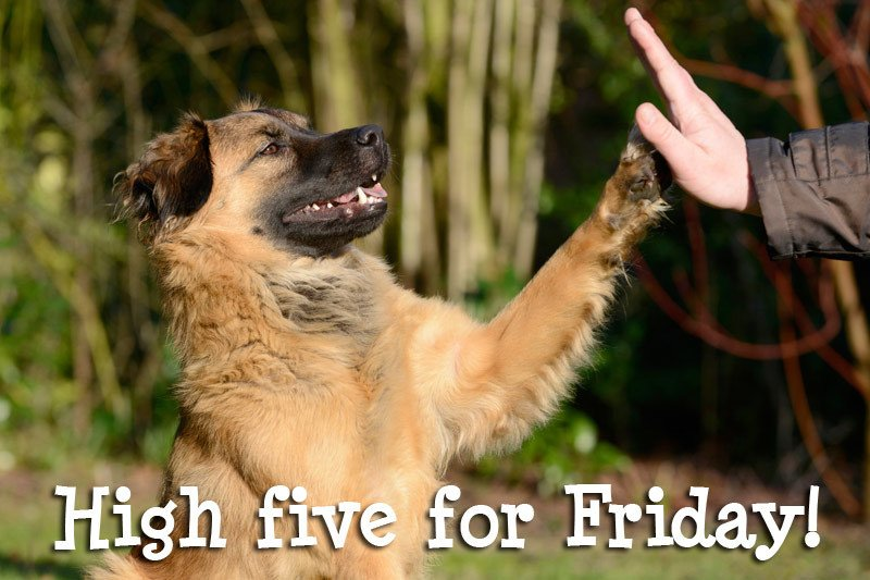 Image result for have a great friday
