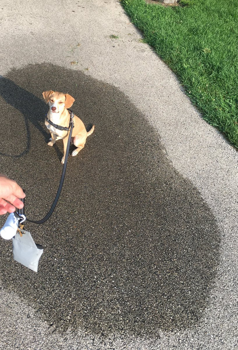 """Some little kid just walked by me and my dog at this spot and the kid goes """"mommy look how much that puppy peed"""" lol https://t.co/4HogjsW5TQ"""