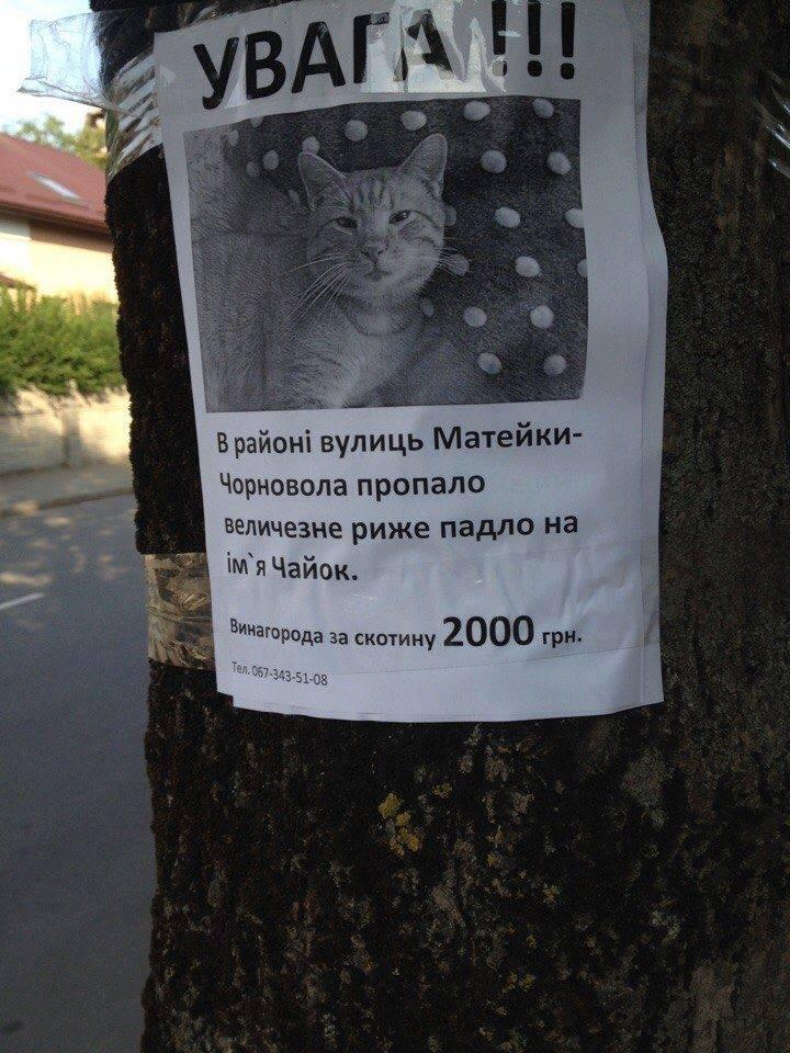 НАБУ вызвало на допрос Онищенко в качестве подозреваемого на 2 августа - Цензор.НЕТ 7086