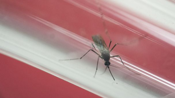 First Outbreak of Locally Transmitted Zika Confirmed in Continental US