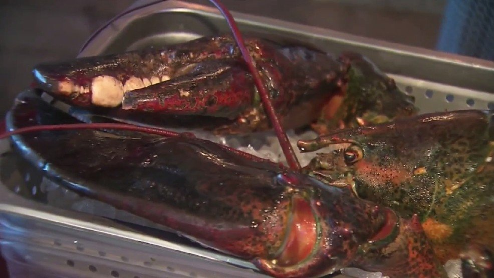 Elderly lobster saved from restaurant dies on his way to retirement aquarium: liveonFOX45