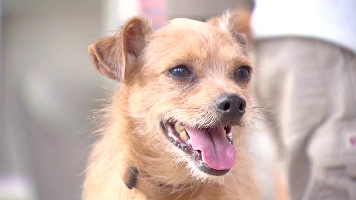 Dog named Corky reunited with family after nearly 7 years missing -