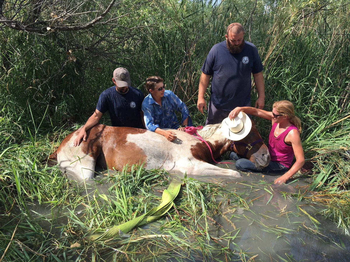 Horse Successfully Rescued After Getting Stuck In Marsh