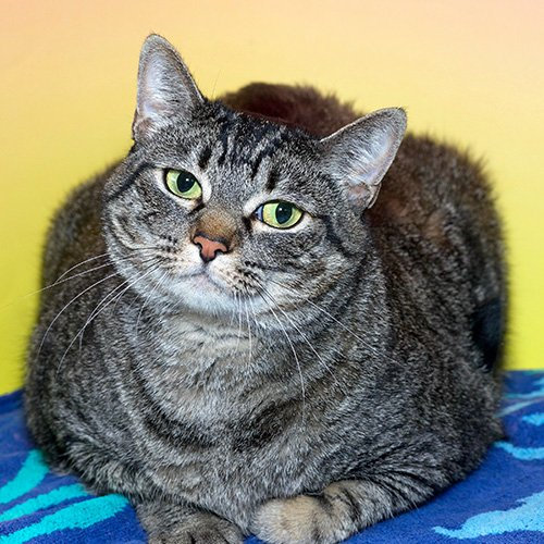 Help sweet Bali from the @AlamedaShelter find her forever home! PerfectPet
