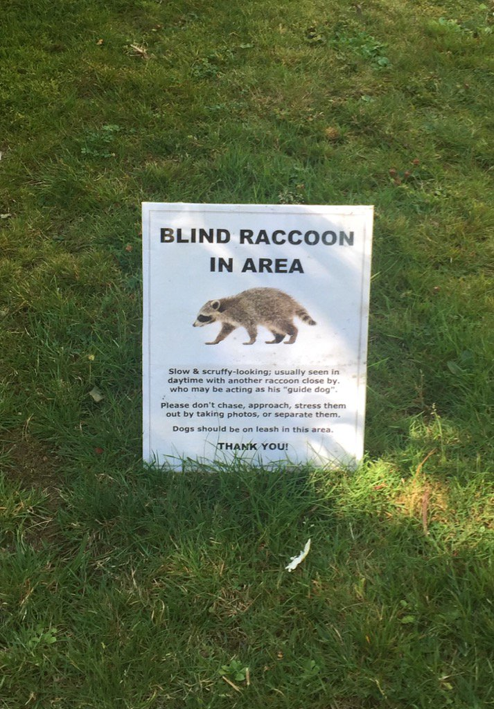 If you happen to be in @CityofVancouver and see a scruffy, slow, blind raccoon...be nice https://t.co/IfbONZ2xtJ