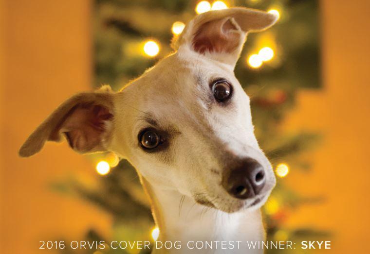 Orvis Dogs on Twitter: