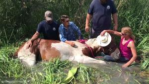 Rescue workers save horse trapped in muddy water