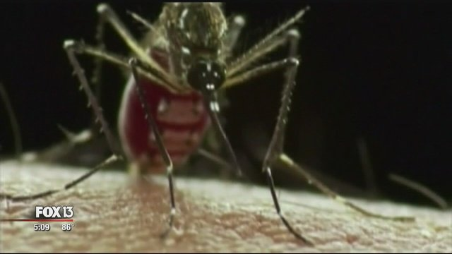 UT researchers in Galveston say they've made promising discovery regarding Zika treatments