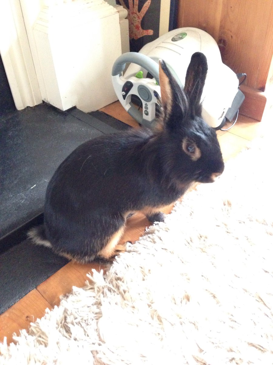 Lost rabbit in Clock House Road. If anyone finds it please tweet me @Beckenham in the mean time retweet this please https://t.co/8Y7LGkJGwA