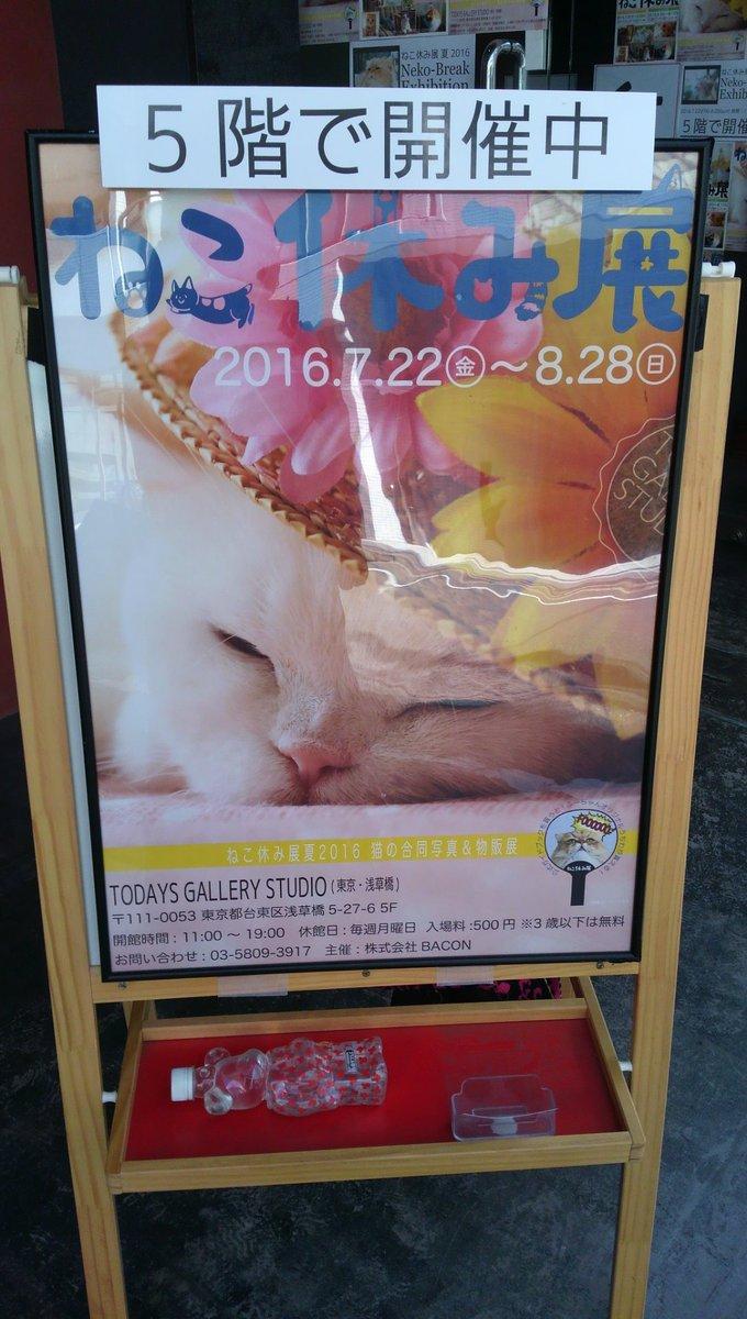 休日出勤の身を癒すべく ねこ休み展に寄り道してきました♪ やっぱり猫が好きだ\(≧▽≦)/ https://t.co/3rqD27p5Ih