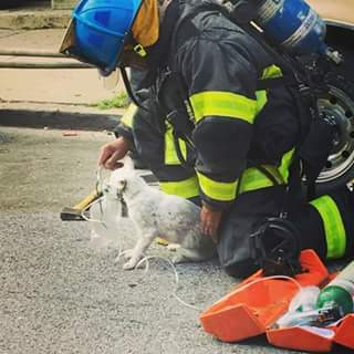 NEW: @BaltimoreFire revive unconscious cat rescued from burning home