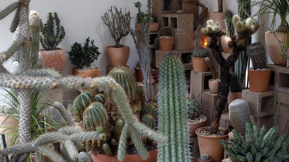 The cactus store in Echo Park that's taking over your Instagram feed