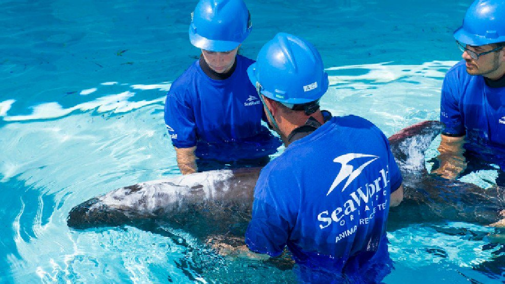 SeaWorld Orlando treating whale that beached herself: LiveOnFOX45