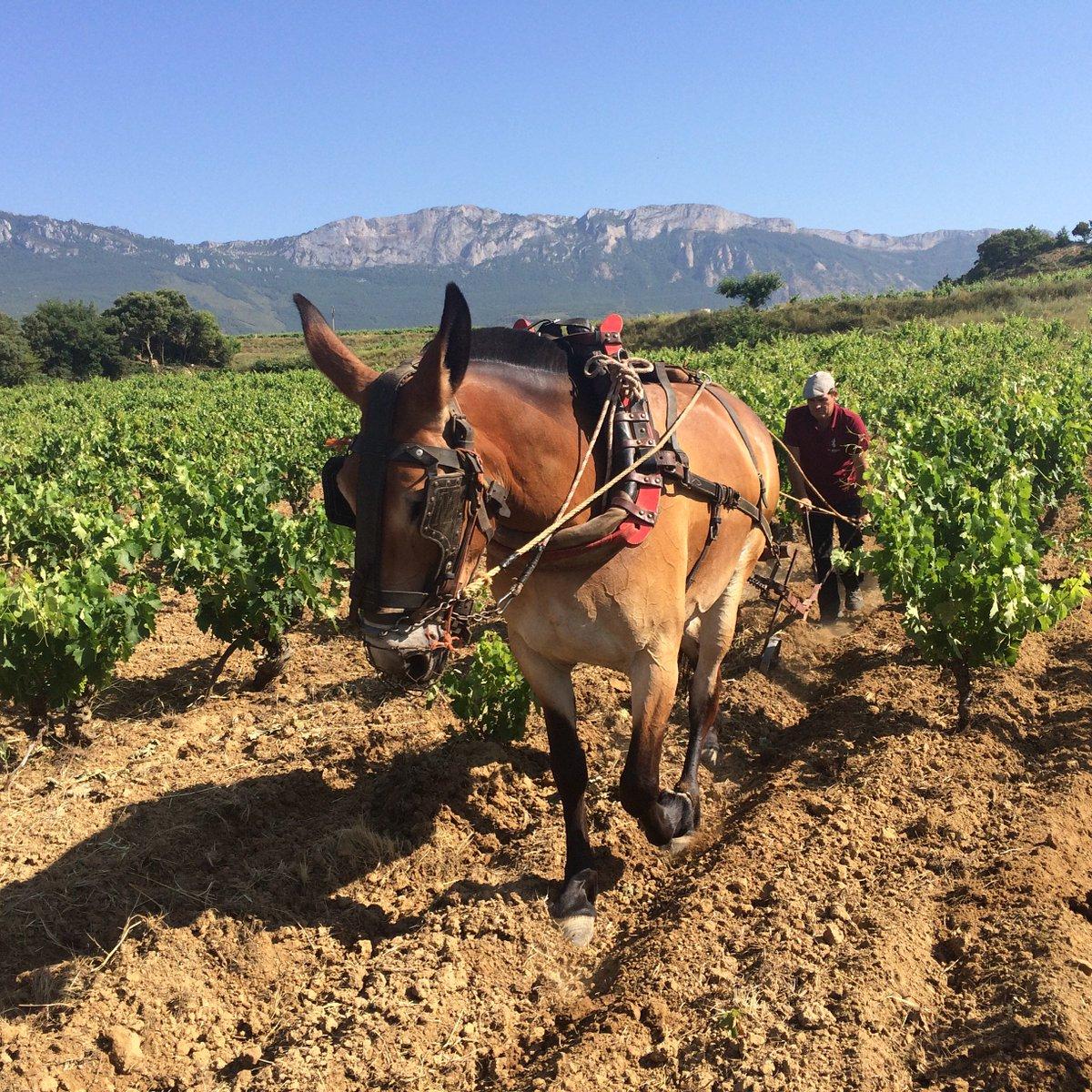 BLOG POST: Will Basque Rioja break away from Rioja? https://t.co/n3piiMTFwM #wine #RiojaAlavesa https://t.co/CorLMUSKoX