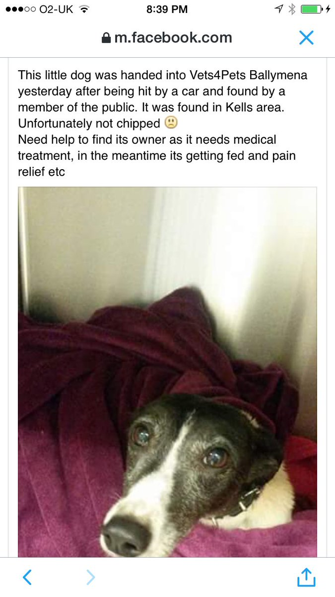 Dog hit by car in kells not chipped currently with vets for pets ballymena - they're trying to find the owner RT! https://t.co/uGcrpVZOnD
