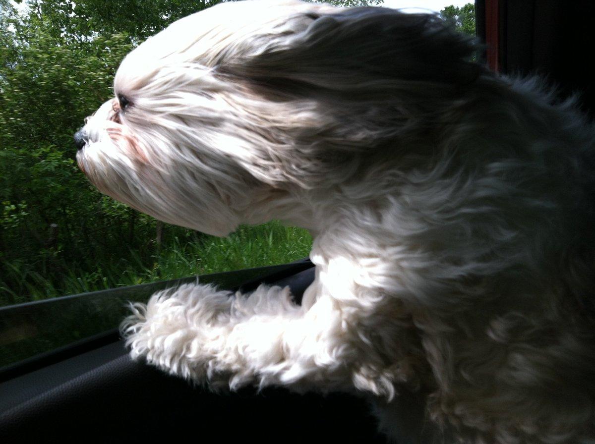 Step 1: Call shotgun. Step 2: Roll window down. Step 3: Head out the window - #DoggieFreedom! https://t.co/SgKizOwT08