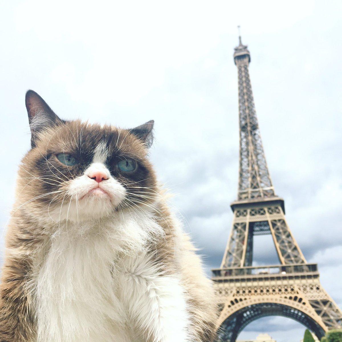 Who Is Grumpy Cat