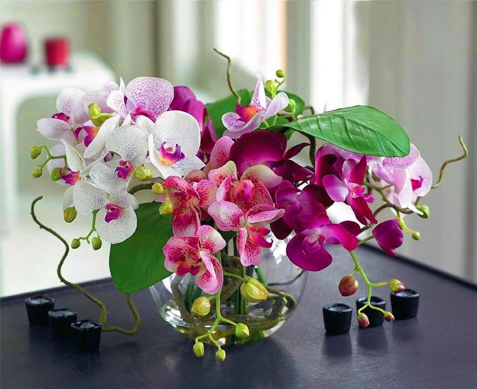 поздравления с днем рождения про орхидею развязка кад находится