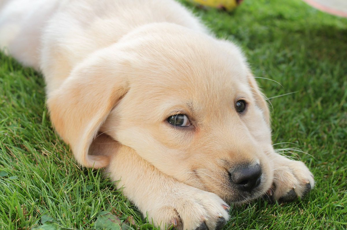 puppy petition puppy petition twitter pets world