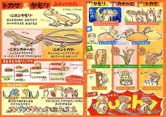 トカゲとヤモリの見分け方を描いたイラストがかわいい Togetter