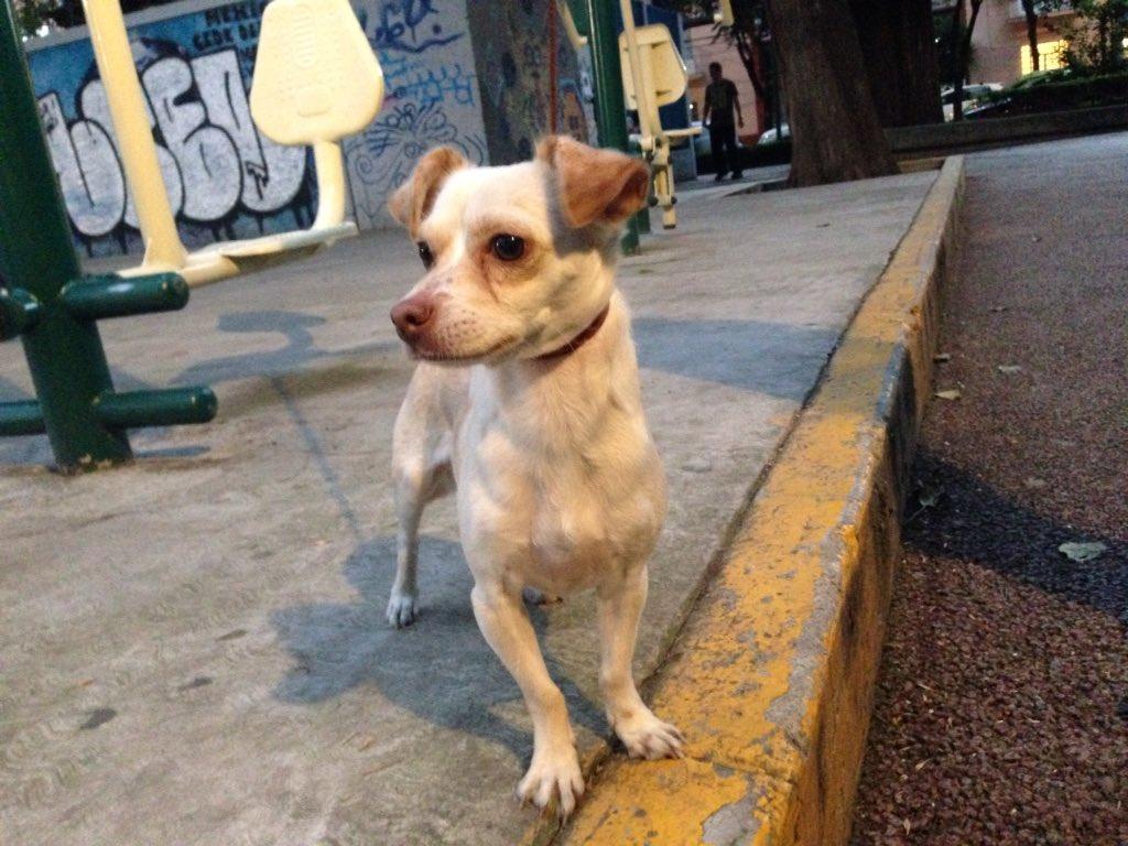 Por fa HELP! Rescaté en @ColoniaEscandon en Prosperidad a éste cachorrín y huele a recién bañado. @UribeMerle RT