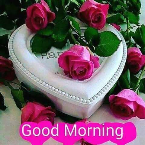 Muskan Tanha On Twitter Good Morning All Frnds