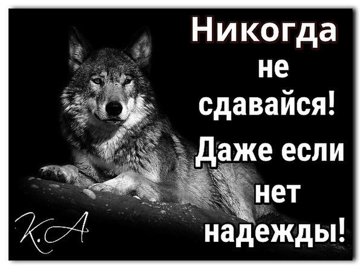 Картинка с волком и надписью никогда не сдавайся, картинки