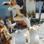 踏み台にされている猫顔面踏まれてめちゃくちゃ痛そう