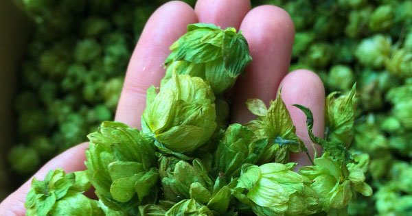 Happy #IPAday! Do you know the origins story? https://t.co/fHgtaxKIE0 #craftbeer https://t.co/0JPxMo1vKx