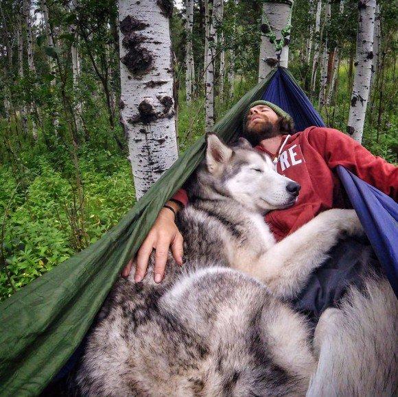 [犬]ウルフドッグ。他のイエイヌとの交配種。[2016年8月5日]