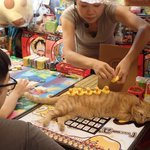 猫「やめろニャ!」w台湾の猫を使ったちょっとしたゲームが楽しそう!