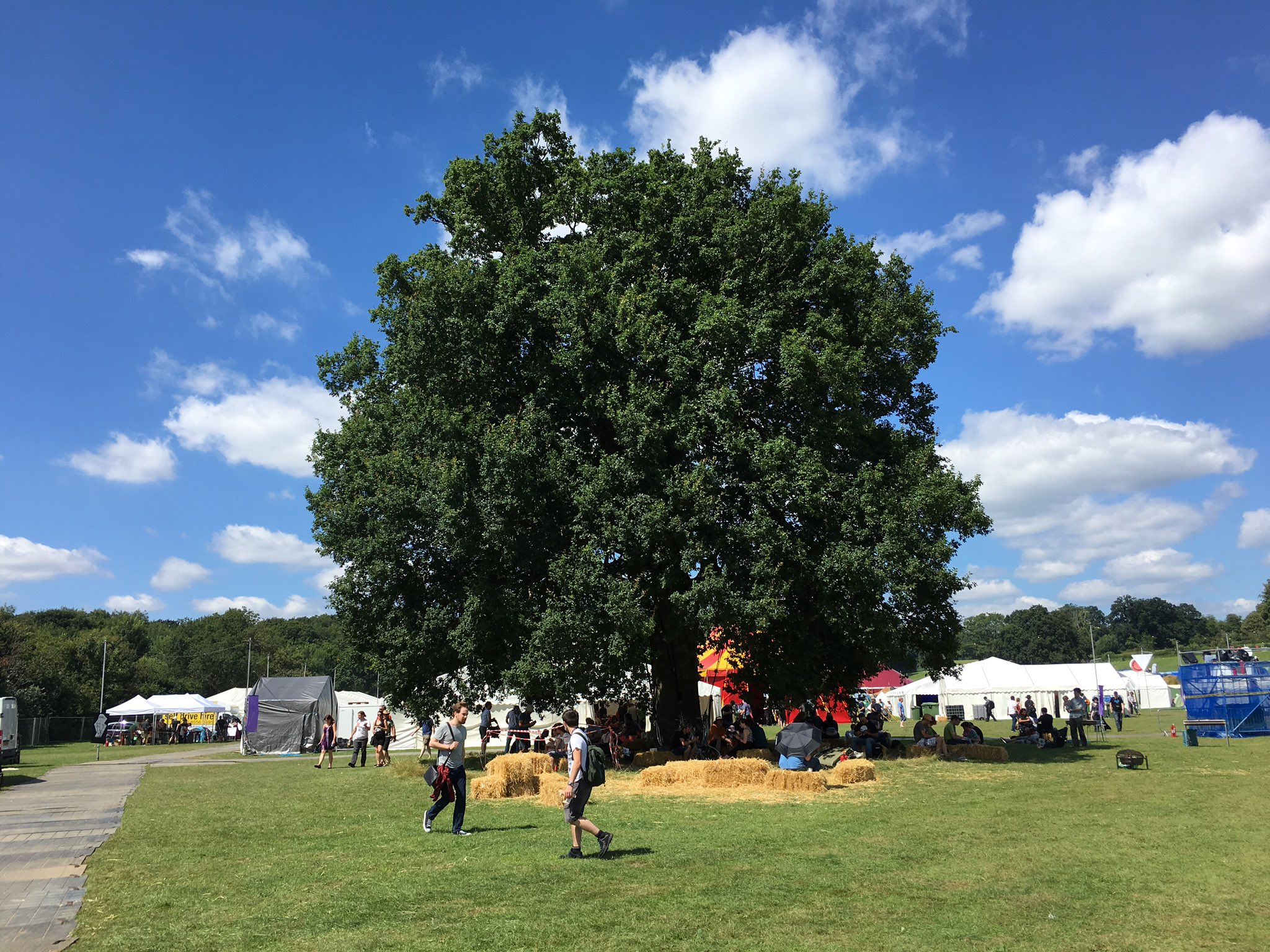 Just had the single most amazing conversation of the year under this tree. Thanks #emfcamp https://t.co/eaP0u8ktZc