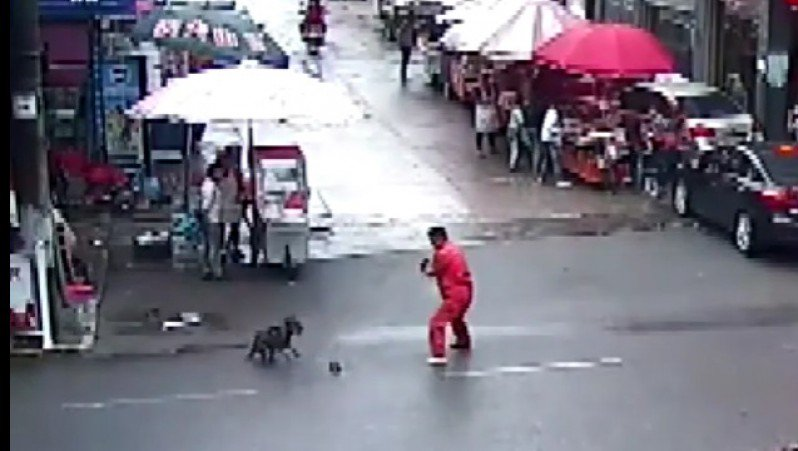 Sarà il Karma? Cane in Cina attacca 23 persone