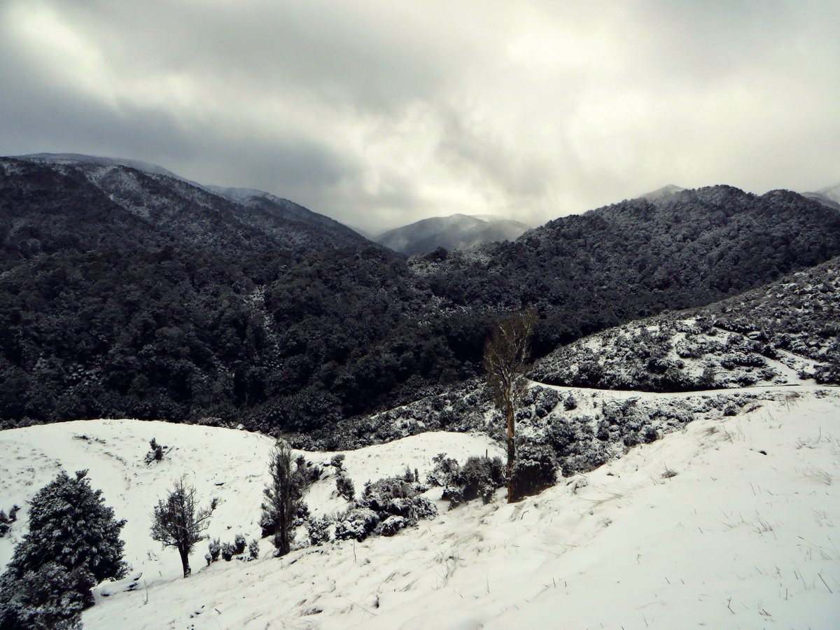 Newzealand Twitter: Wildside New Zealand (@wildsidenz)