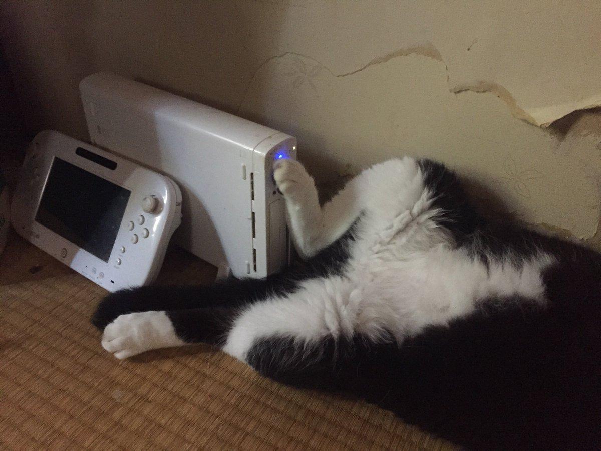 大変な寝姿。踏み込まれたら電源落ちるな…とゲームしながら気になっていた。 https://t.co/lxSvVj2cZG