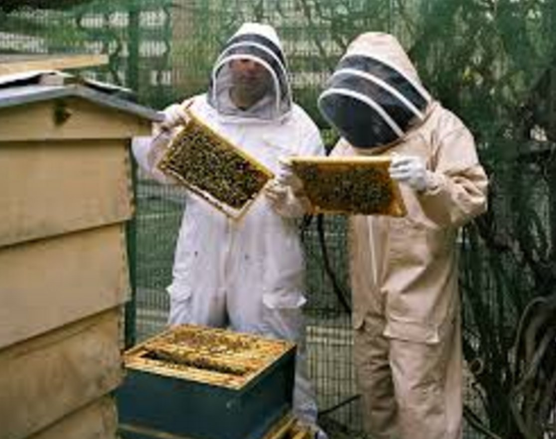 if it's a draw in the fencing, they decide it by counting bees https://t.co/E1W596QIVc