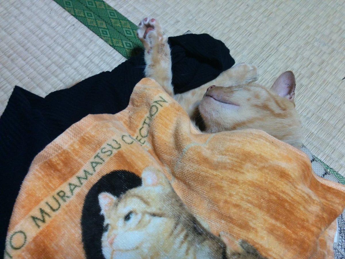 RT @muumi5: #世界猫の日 https://t.co/JpuvjG3iZi