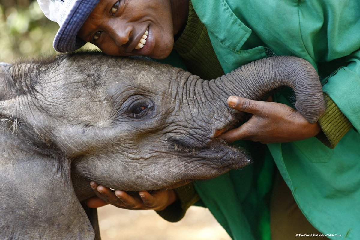 Every day at #DSWT is #worldelephantday because… being a mother to orphaned elephants is more than just a day job https://t.co/QDyiQUM8N7
